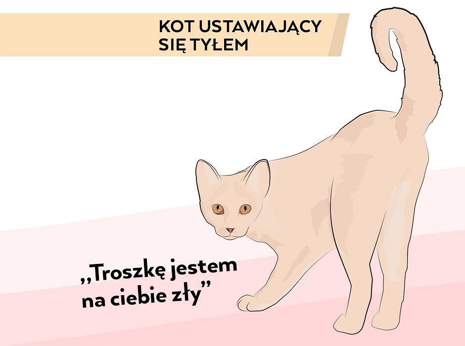 dziewczyna umawia się z kotami