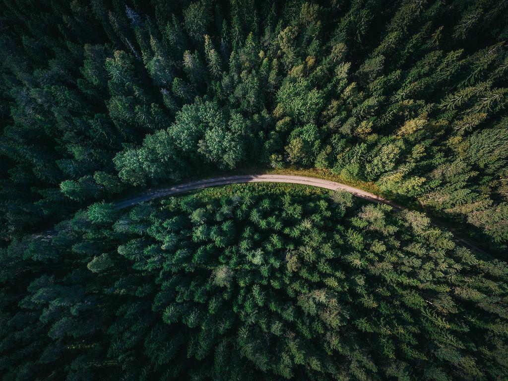 Czy trzeba nosić maseczki w lesie? Jest odpowiedź Ministerstwa Środowiska (zdjęcie ilustracyjne)