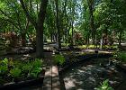 Nowy Ogród Miejski na Jazdowie: rośliny, sadzawki, siedziska i obiekty ze śmieci