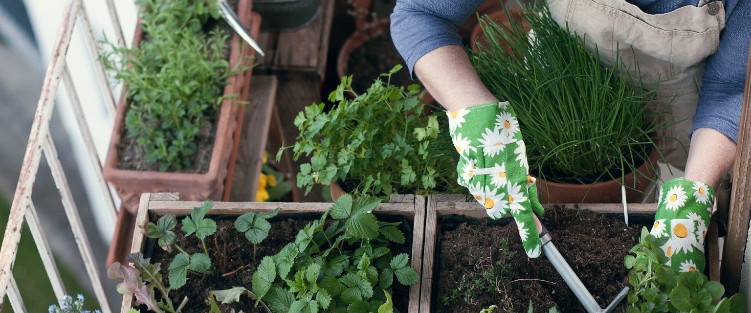 Coraz więcej osób zakłada balkonowe ogródki (Shutterstock.com)