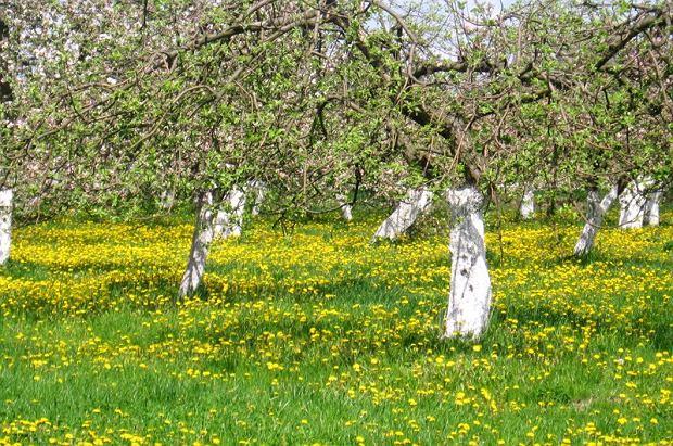 Agroturystyka Pod Zachrypniętym Kogutem