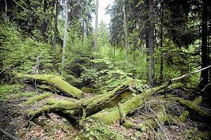 Ludzie uciekają przed koronawirusem do lasu. Tu łatwiej zapomnieć o epidemii