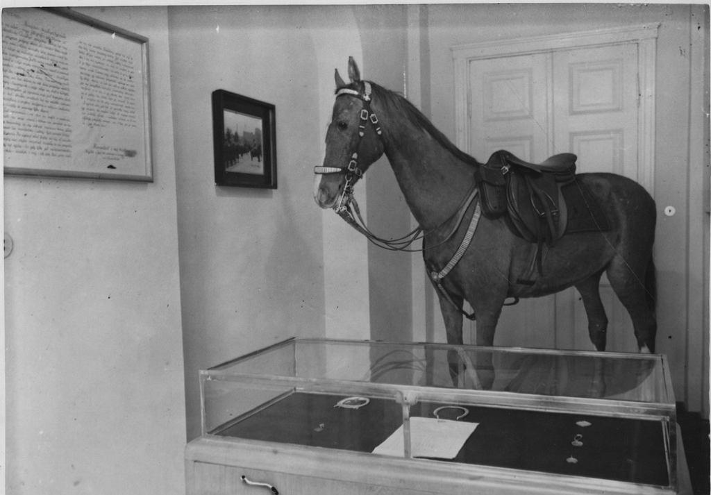 1938 rok: Kasztanka - koń marszałka Józefa Piłsudskiego w Muzeum Józefa Piłsudskiego w Belwederze.