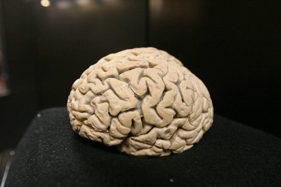 W hipokampie zachodzą procesy neurogenezy, czyli powstawanie nowych neuronów
