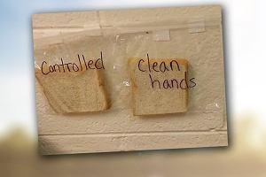 Twoje dziecko, już nigdy nie zapomni umyć rąk, kiedy pokażesz mu eksperyment ze spleśniałym chlebem