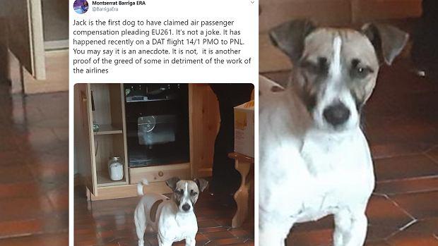 Pies otrzymał odszkodowanie za odwołany lot. Właściciele znaleźli lukę w prawie