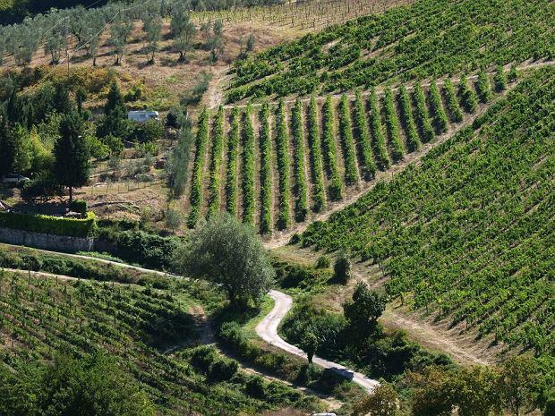 Toskania (Włochy). Via Chiantigiana / fot. Shutterstock