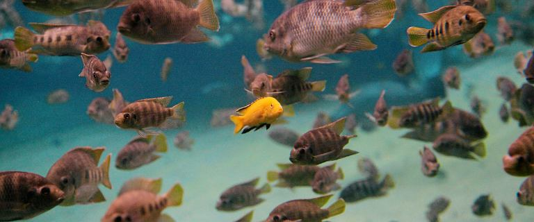 Czerwona Lista powiększyła się o 7 tysięcy nowych zagrożonych gatunków