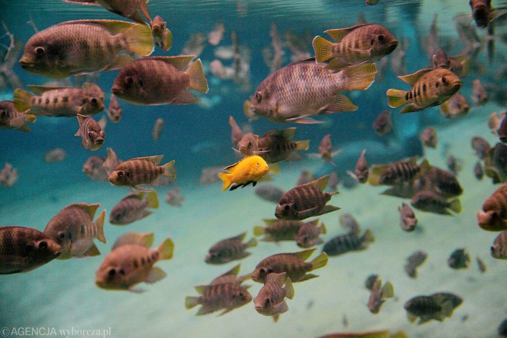 Czerwona Lista powiększyła się o 7 tysięcy nowych zagrożonych gatunków. 'Jest coraz gorzej'