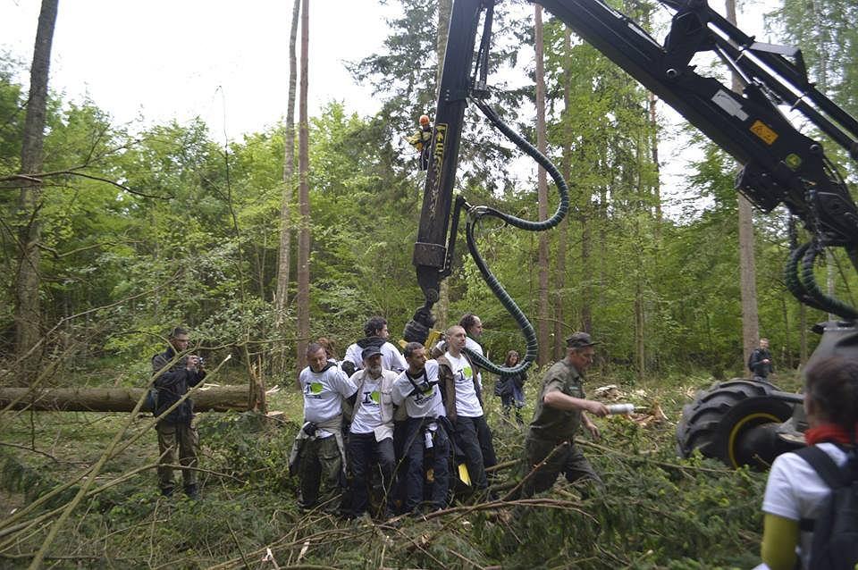 Blokada maszyn służących do wycinki w Puszczy Białowieskiej