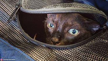Kot w podróży.