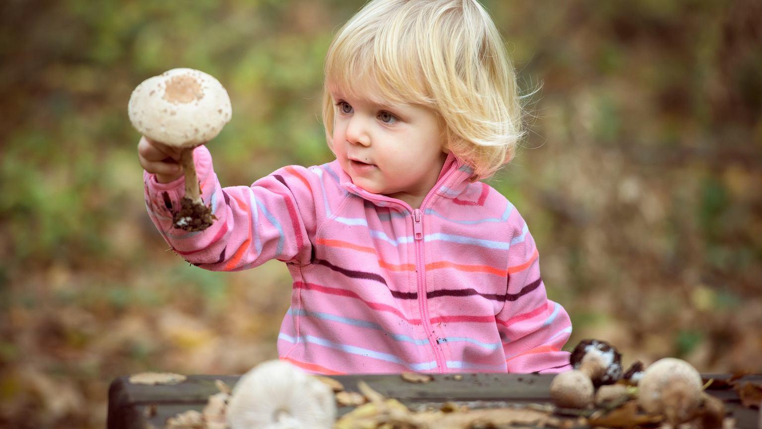 Od Kiedy Dzieci Mogą Jeść Grzyby Wielu Rodziców Popełnia