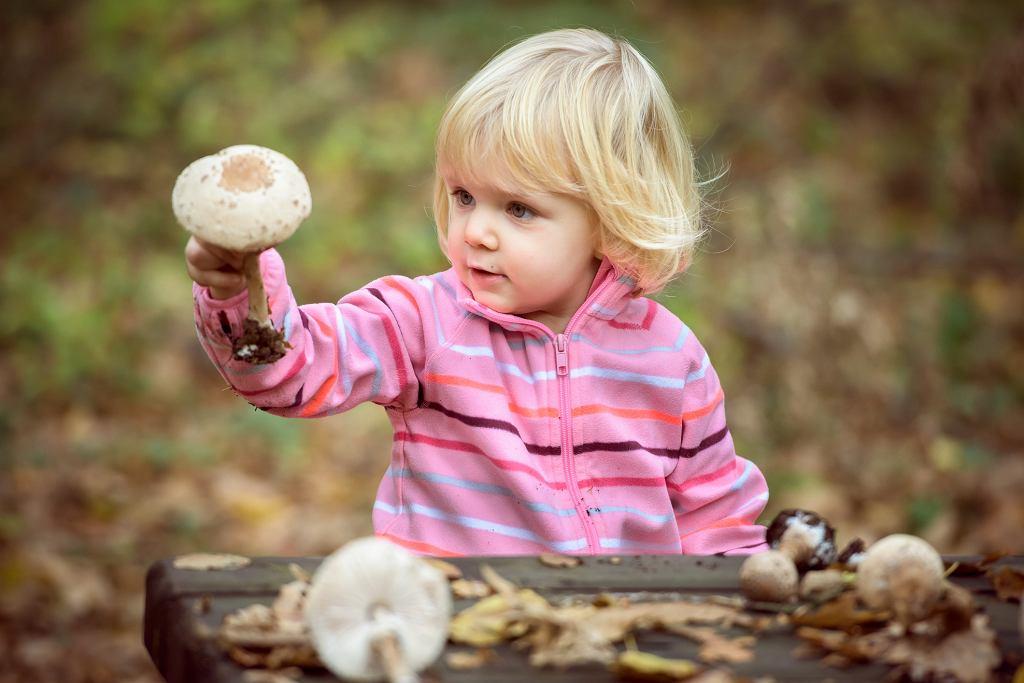 Od kiedy dzieci mogą jeść grzyby?