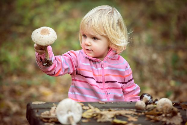 Od kiedy dzieci mogą jeść grzyby? Wielu rodziców popełnia błąd i karmi nimi za wcześnie