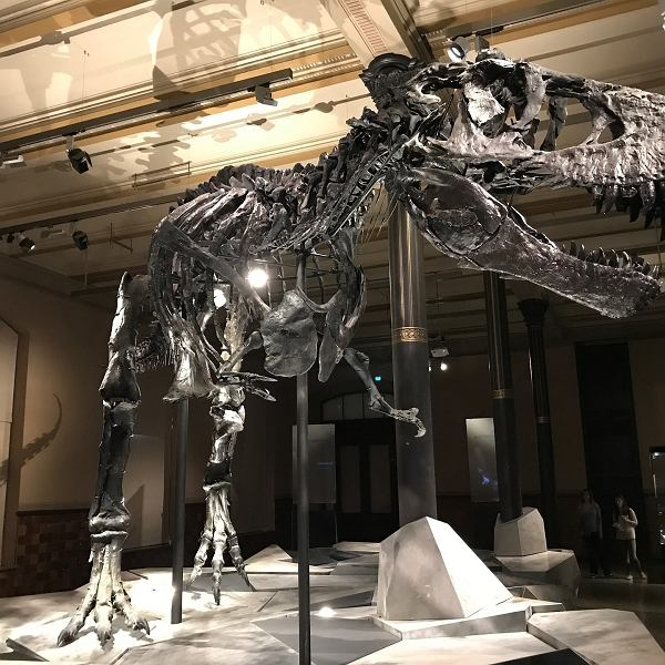 T-Rex, zdj. ilu