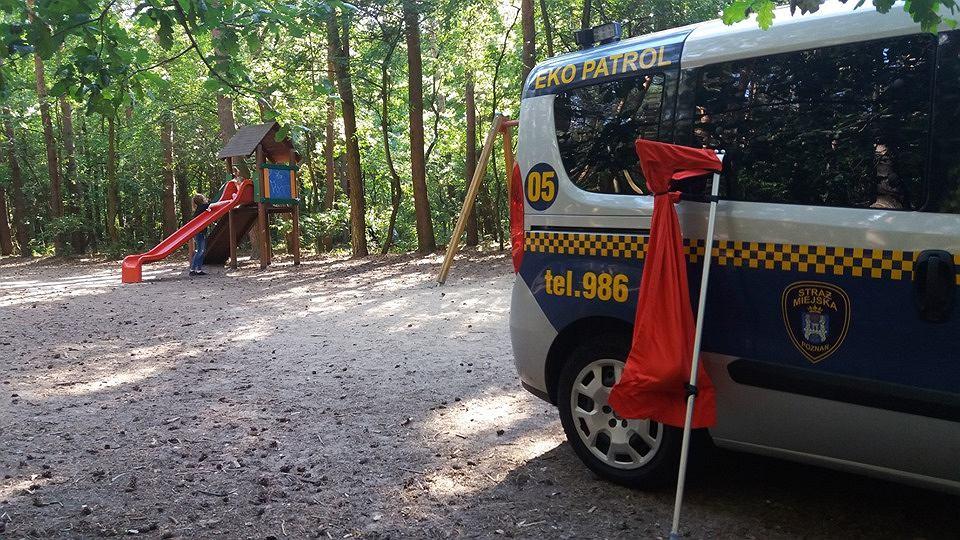 Poznań: Dzieci znalazły węża na placu zabaw. To 1,5-metrowy boa dusiciel