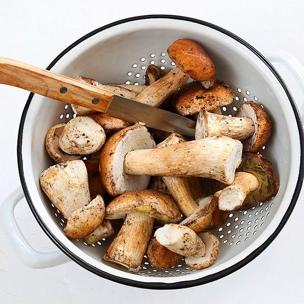 Szczyt zbioru innych grzybów przypada zwykle na wrzesień