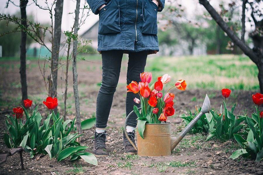 Sposób na mszyce w ogrodzie