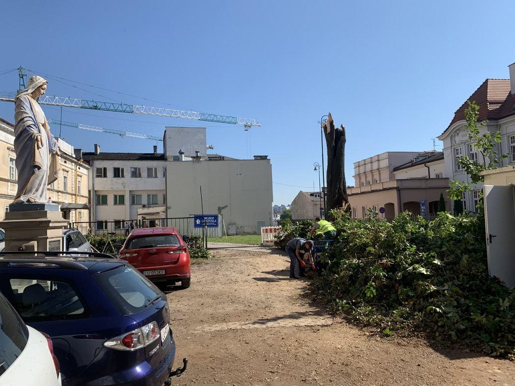 Skutki burzy przy ul. Staszica. Uszkodzony kasztanowiec