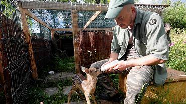 'Mysikrólik' pomaga dzikim zwierzętom