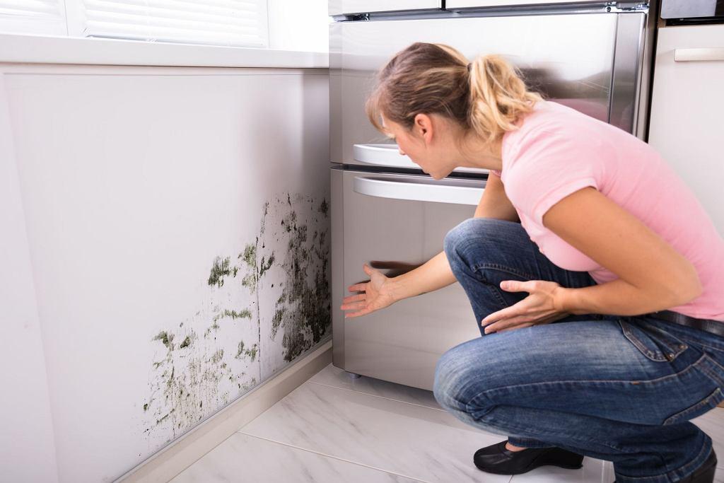 Grzyb na ścianie w kuchni