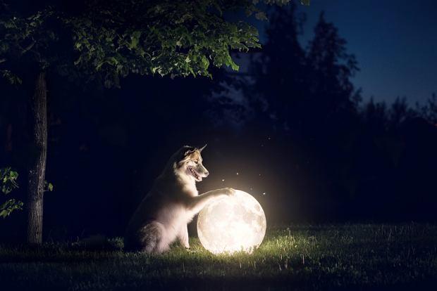 Czy pies widzi w ciemności? Zdjęcie ilustracyjne