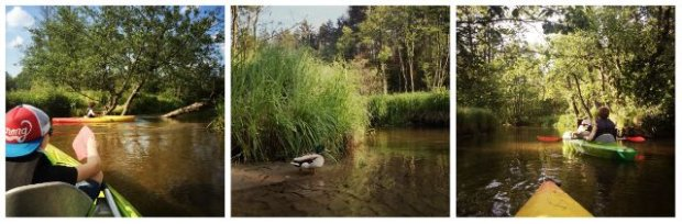 Spływ na odcinku od Obroczy do Zalewu Rudka zachwyca zmiennością krajobrazu i urozmaiceniami na trasie. Spotkania z mieszkańcami rzeki i okolicznych pól są tu niemal gwarantowane!