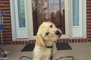 Psy też potrafią być ciekawskie. A wtedy robią TO!