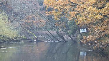Rzeka Rega (zdjęcie ilustracyjne)