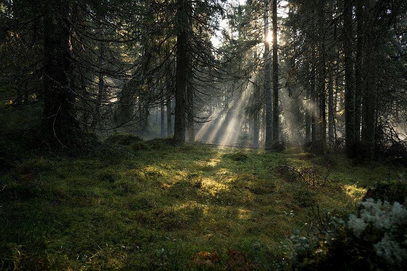 Historyczny las w zachodniej części regionu Värmland