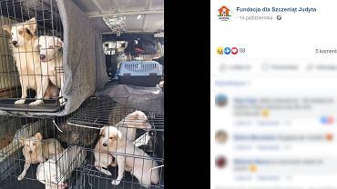 Psy zabrane z domu w Chojnie