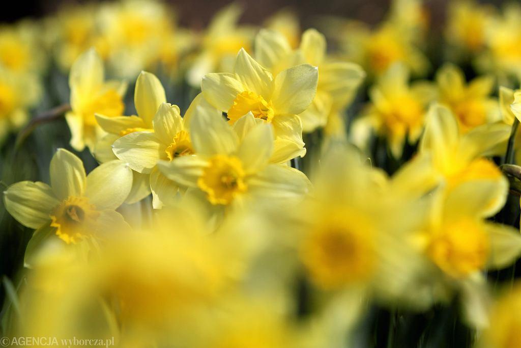 Pogoda na Wielkanoc 2019. Czy święta wielkanocne będą ciepłe i słoneczne?