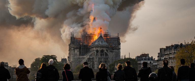 Tysiąc dwustuletnich dębów do wycinki? Na odbudowę iglicy Notre Dame. Francuzi podzieleni