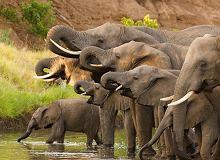 Ekolodzy biją na alarm. ''Milion gatunków zwierząt i roślin może niedługo wyginąć''