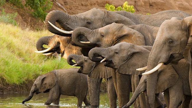 """Ekolodzy biją na alarm. """"Milion gatunków zwierząt i roślin może niedługo wyginąć"""""""