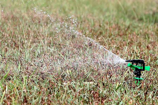 Zraszacz na trawniku