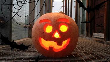 Redakcyjna dynia na Halloween