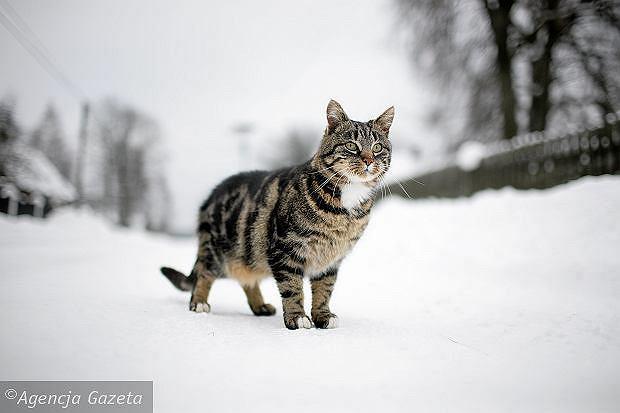 Kot (zdjęcie ilustracyjne)