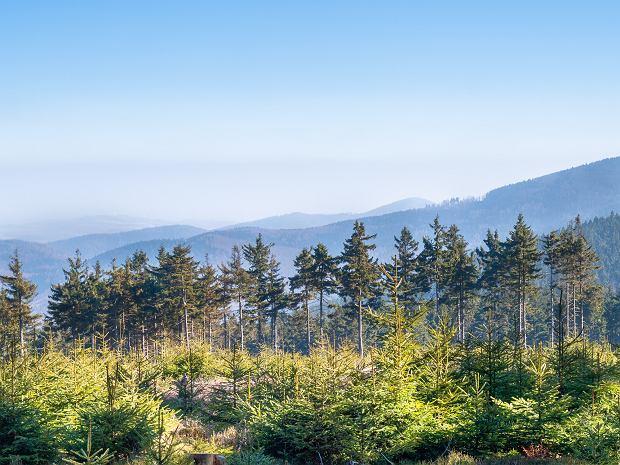 Góry Sowie - najwyższe szczyty, szlaki oraz atrakcje regionu