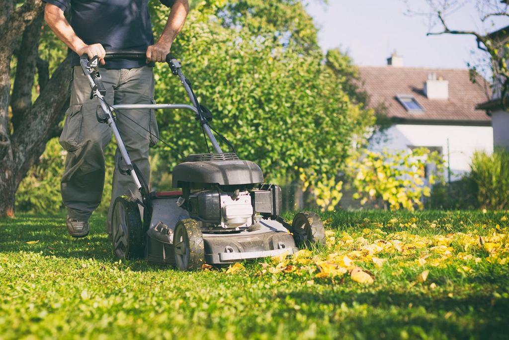 pielęgnacja trawnika na jesień