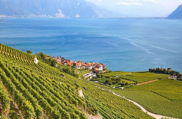 Winnice nad jeziorem Genewskim w regionie Lavaux / fot. Shutterstock