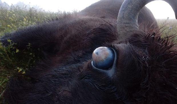 Gałka oczna chorego zwierzęcia