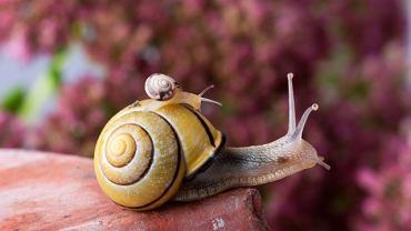Szkodniki w ogrodzie - ślimak