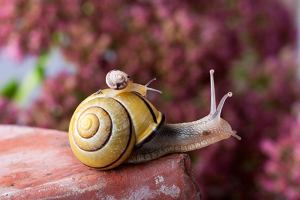 Walka ze szkodnikami w ogrodzie i na balkonie - produkty naturalne
