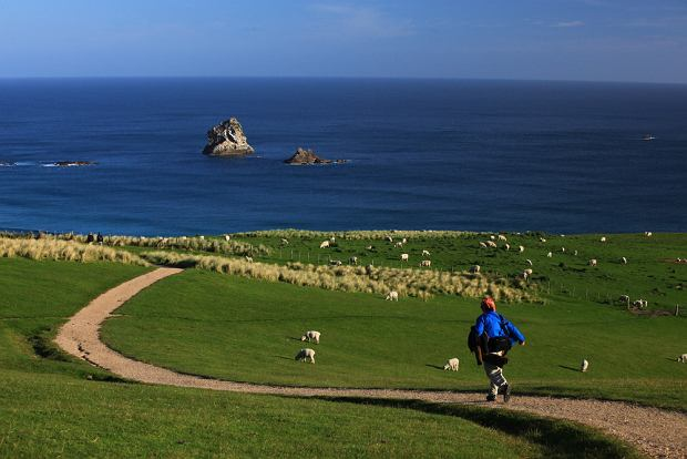Nowa Zalendia to państwo wyspiarskie. Dzieli się na wyspę północną i południową oraz wiele pomniejszych. Na zdjęciu krajobraz w regionie Otago na południu Nowej Zelandii / shutterstock