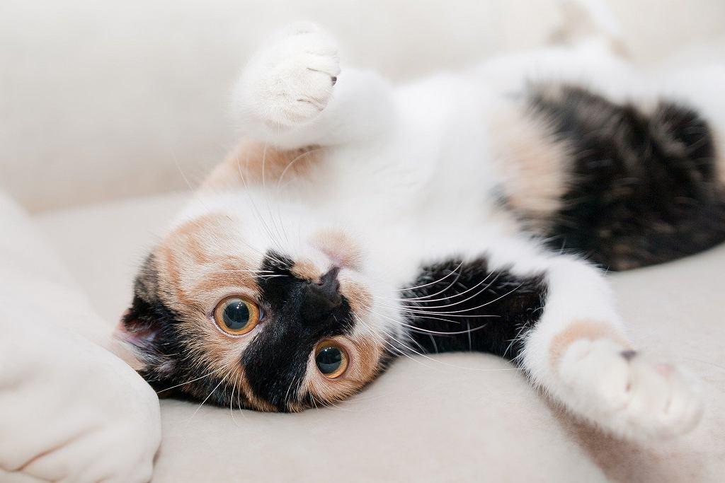 Sennik: kot. Zdjęcie ilustracyjne