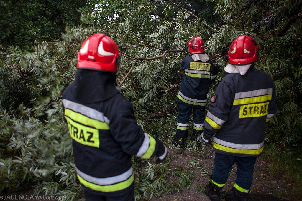 Strażacy usuwają powalone drzewa [zdjęcie ilustracyjne]