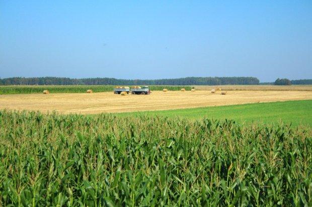 Rekordowa transakcja zakupu gruntów w Polsce