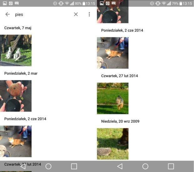 To, według Google, są zdjęcia psów