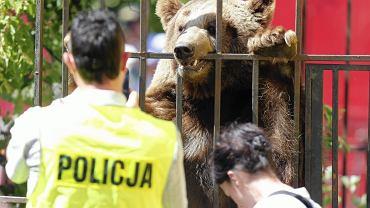 Interwencja w cyrku Vegas w Pawłowicach